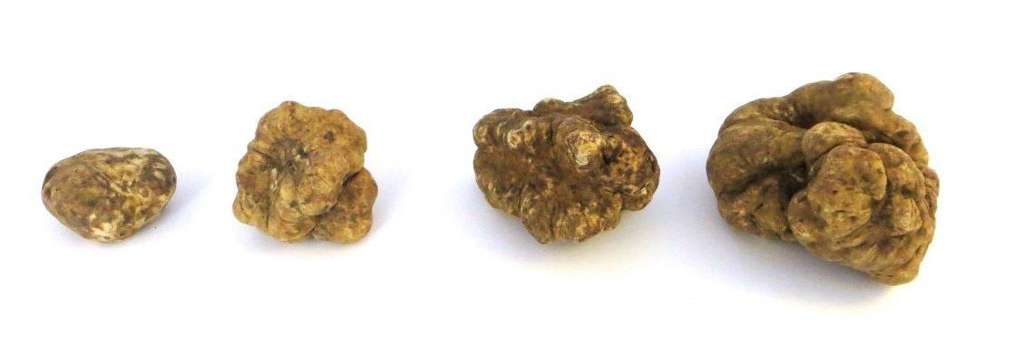 truffle grading